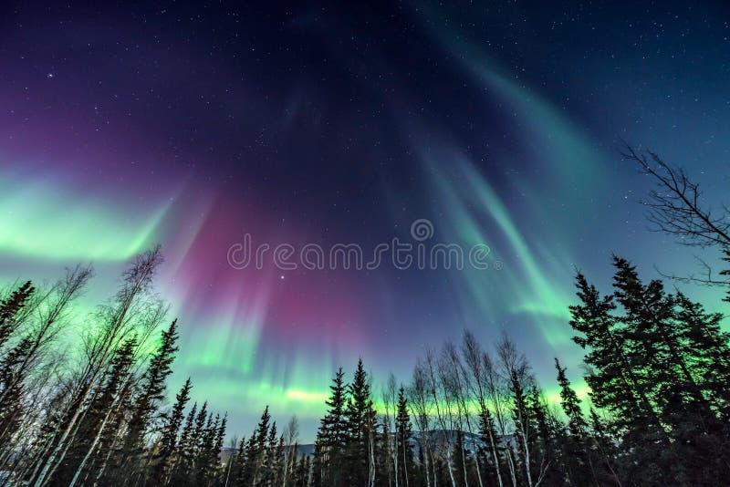 Luci nordiche porpora e verdi che raggiungono per il cielo fotografie stock libere da diritti