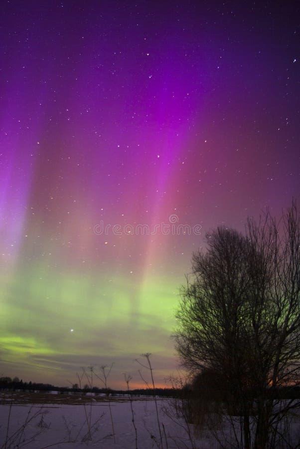 Forti luci nordiche in Estonia fotografie stock libere da diritti