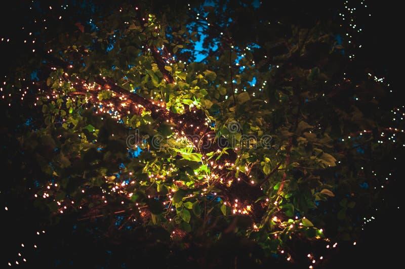 luciole photographie stock libre de droits