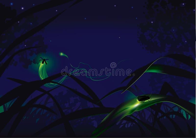 lucioles illustration stock