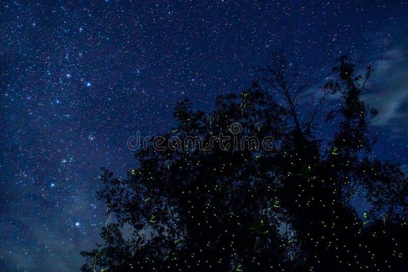 Lucioles rougeoyant la nuit images stock
