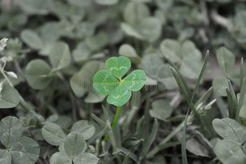 Luck O The Loved royalty free stock image