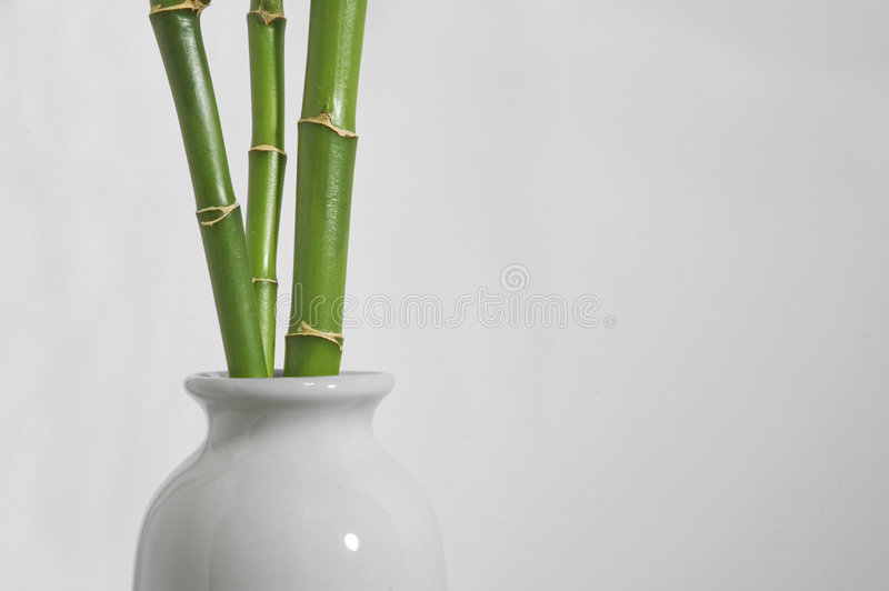 Lucky bamboo stock photos