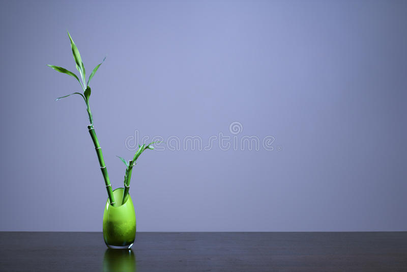 Download Lucky Bamboo In Green Glass Vase Stock Image - Image: 12969319