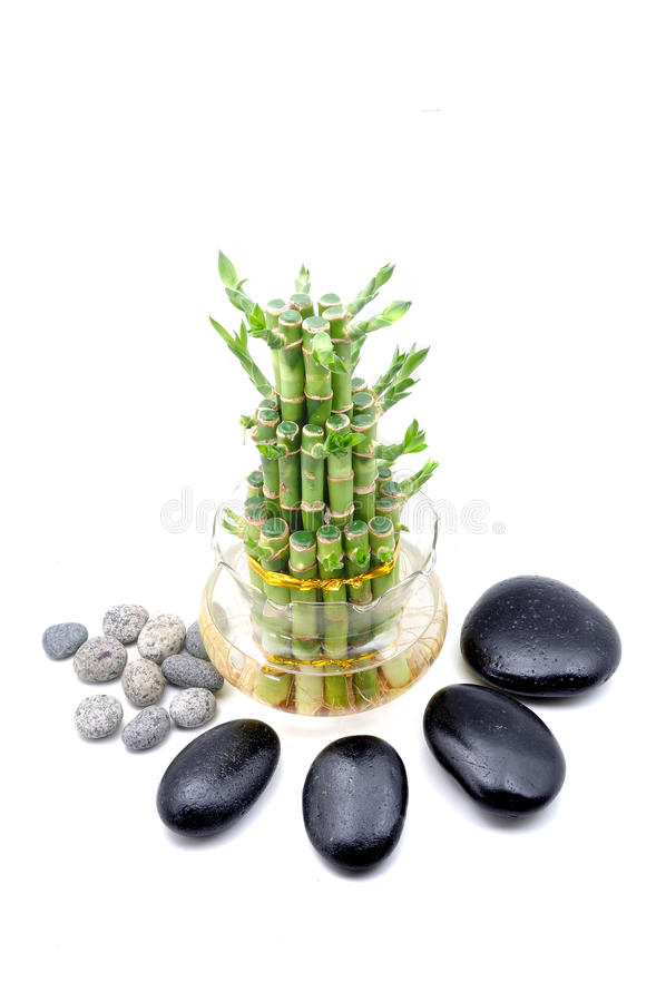 A lucky bamboo plant on a white background stock photo