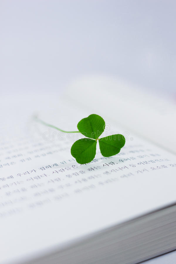 Download Lucky clover stock photo. Image of indoors, luck, green - 26836912