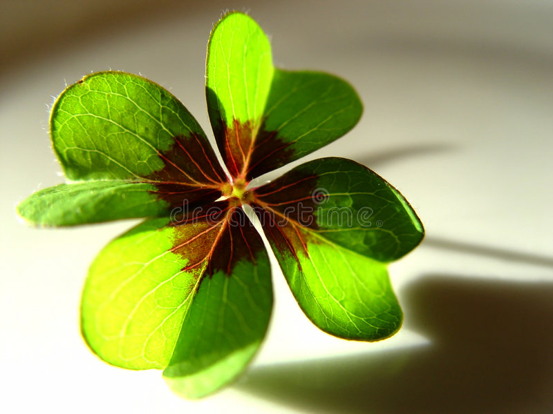 Lucky clover. Macro of a 4-leaf clover with sun and shadow and some blurs