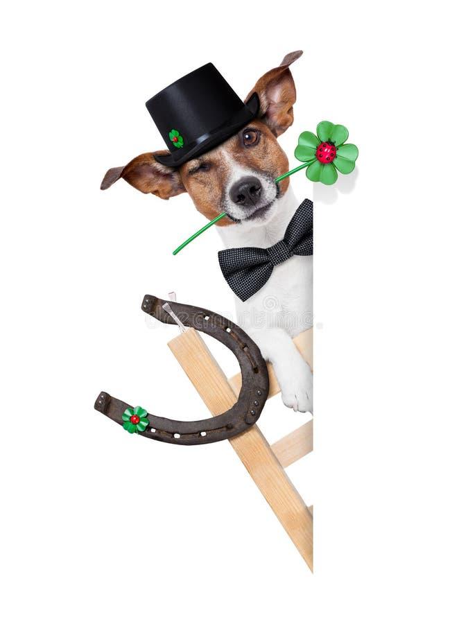 Lucky dog royalty free stock photo