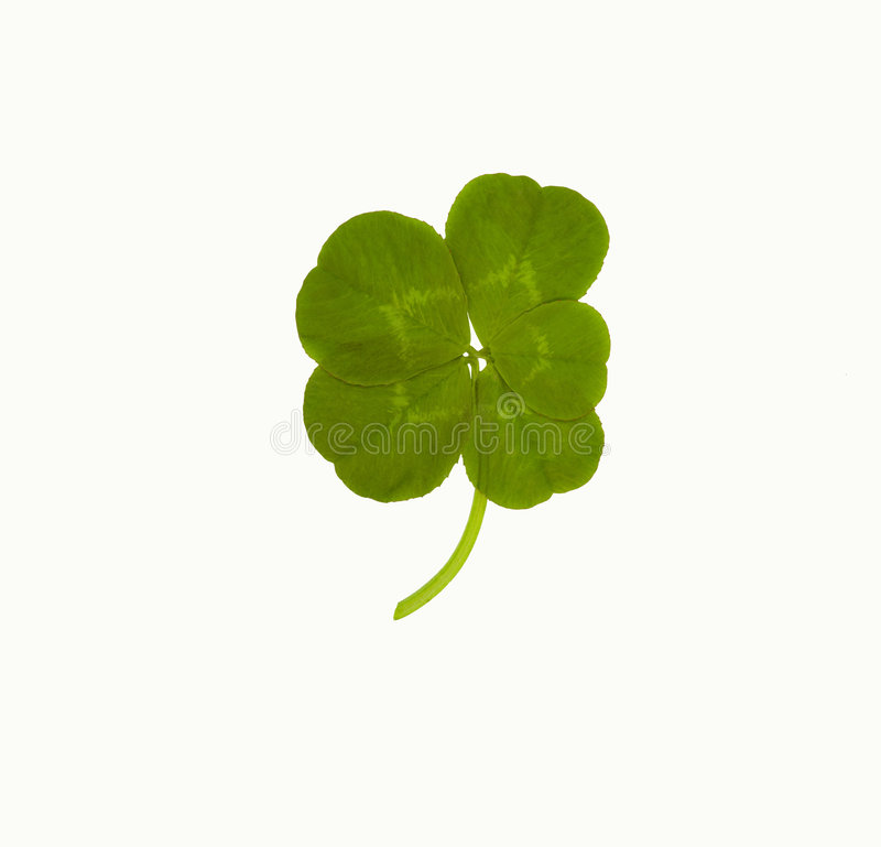 Lucky Five Leaf Clover Stock Image Image Of Clover Lucky
