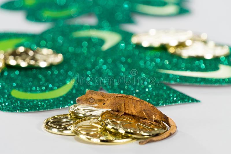 Lucky Gecko Has Gold royalty-vrije stock foto's