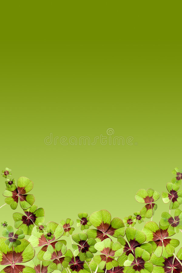 Download Lucky page stock image. Image of patrick, leafed, isolated - 7882323