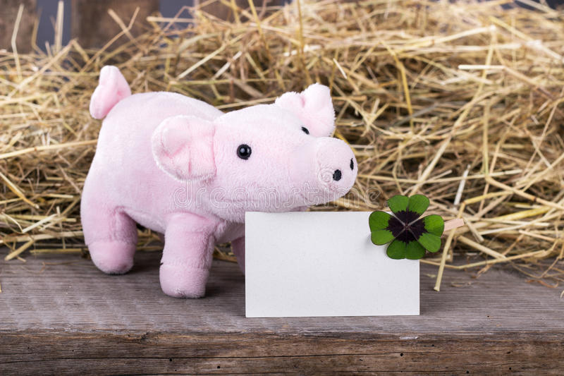 Lucky pig. With cloverleaf and card royalty free stock images