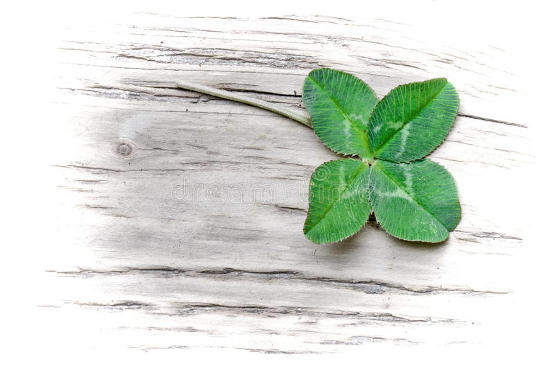 Lucky trefoil stock photo