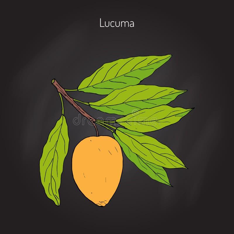 Lucuma Organisk superfood vektor illustrationer