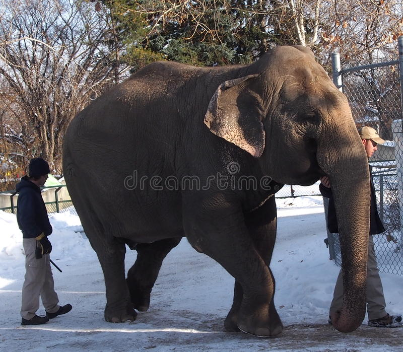 Lucy The Elephant With Trainers