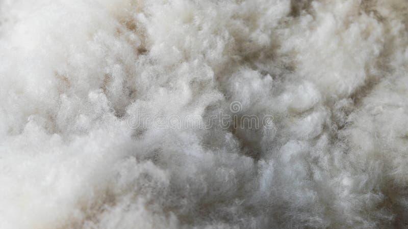 Luddig och vit ren fårull Härlig textur som ser som moln arkivbilder