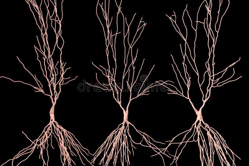 Ludzcy hippocampus neurony, komputerowa odbudowa ilustracja wektor