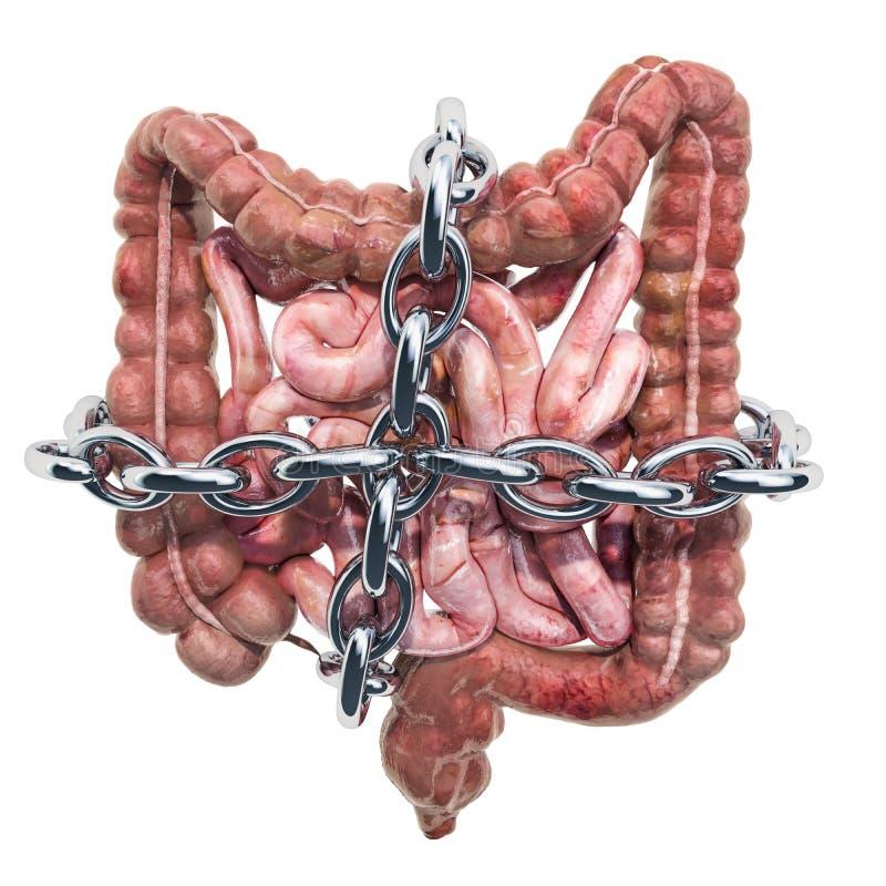 Ludzcy jelita z łańcuchem Brzuszny bólowy pojęcie, 3D rendering ilustracja wektor