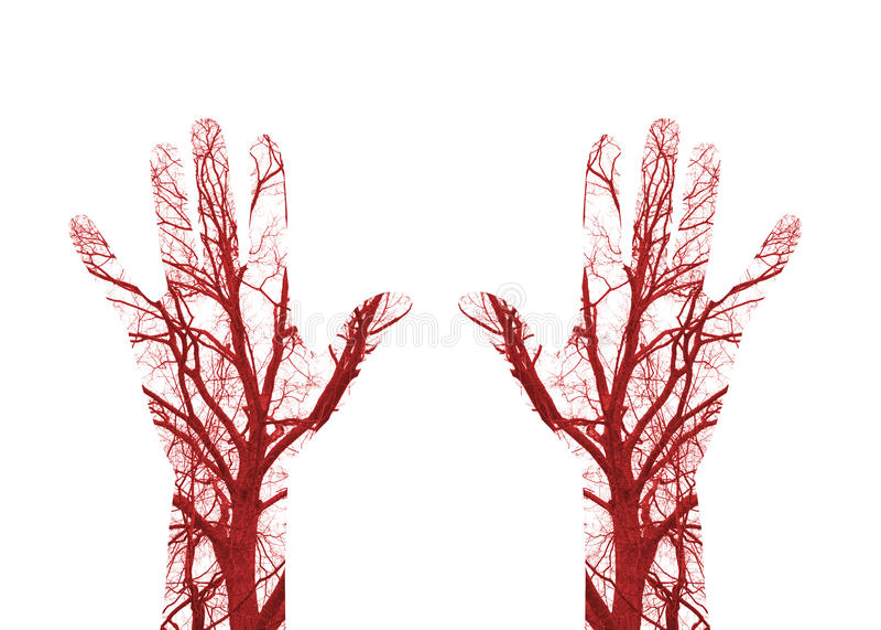 Ludzcy naczynia krwionośne zdjęcia royalty free