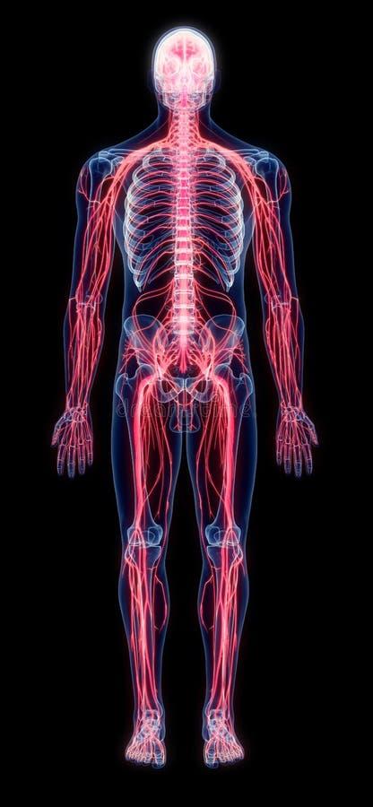 Ludzcy nerwy royalty ilustracja