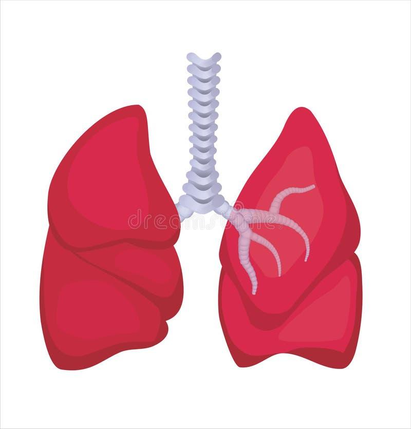 ludzcy płuca obraz stock