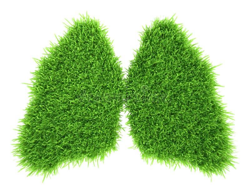 Ludzcy płuca w postaci zielonej świeżej trawy zdjęcie stock