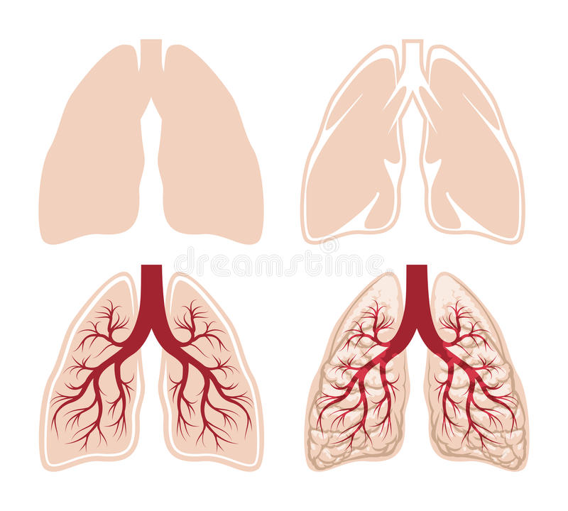 Ludzcy płuca wektorowi ilustracji