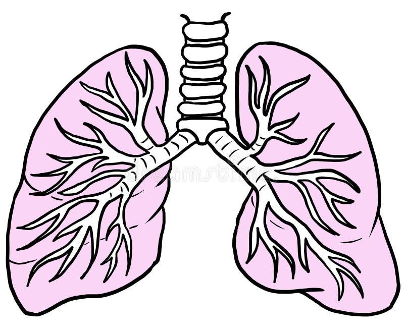 Ludzcy płuca z menchiami barwią, Kreskowy rysunek zdjęcia royalty free