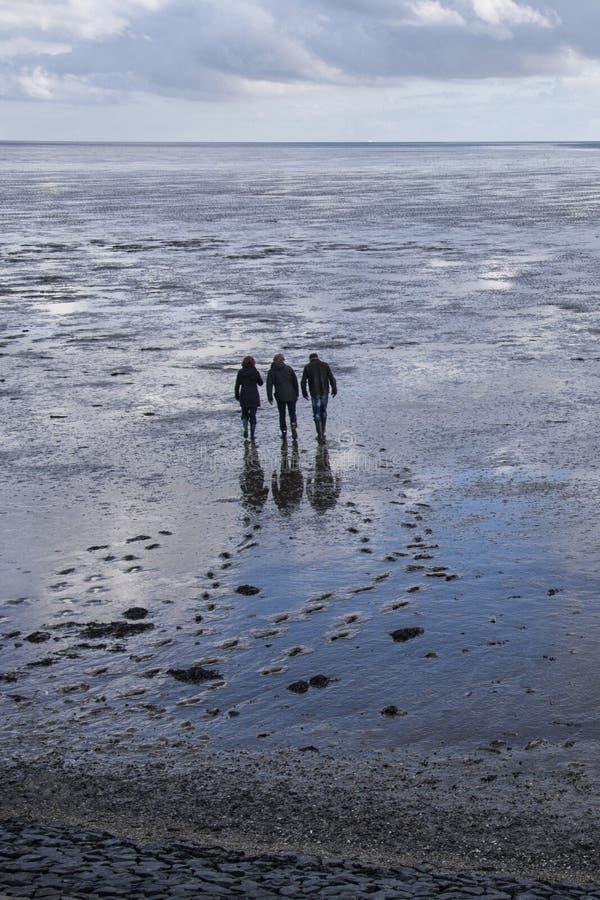 Ludzie chodzi na bagnach Waddenzee, holandie fotografia stock