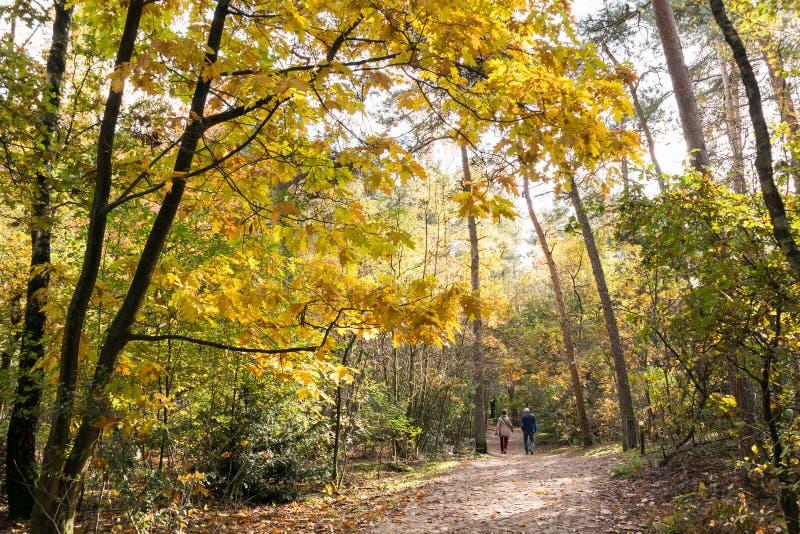 Ludzie chodzi w drewnach, spadek w holandiach zdjęcia stock