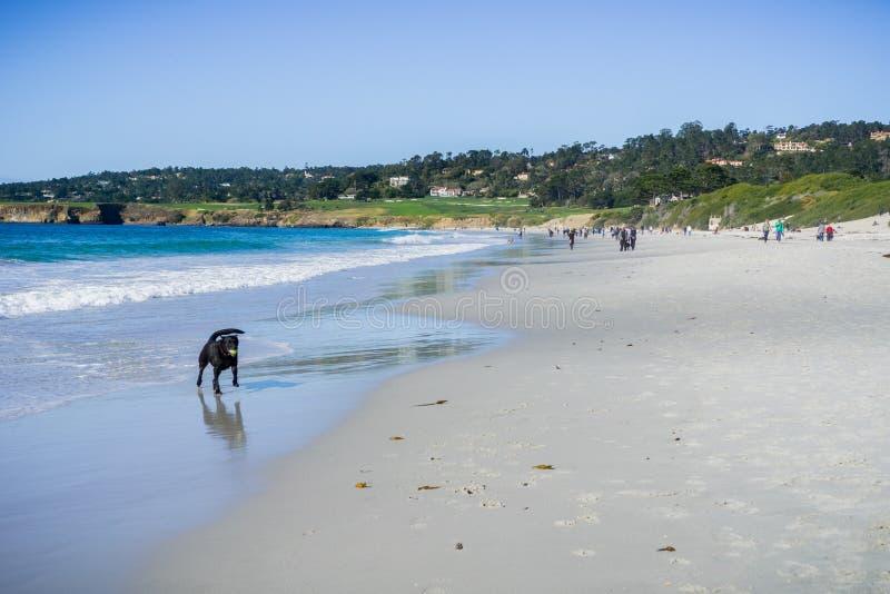 Ludzie i psy ma zabawę na plaży, morza, Monterey półwysep, Kalifornia fotografia royalty free