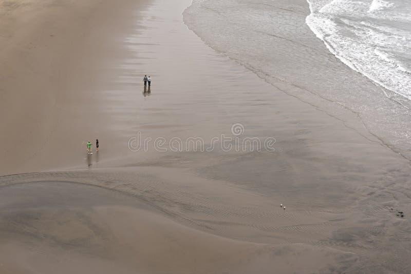 Ludzie i ptaki w parach na plaży obraz stock