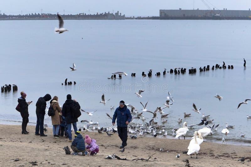 Ludzie karma ptaków w zimnym sezonie, spacery na morzu w zimnym sezonie fotografia royalty free
