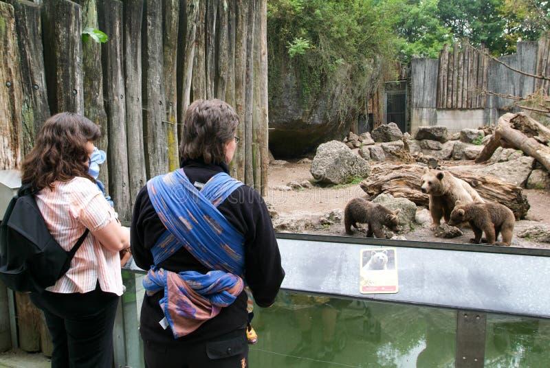 Ludzie patrzeje brown niedźwiedzi w zoo Goldau fotografia royalty free