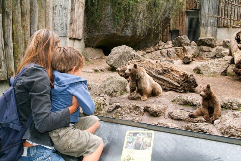 Ludzie patrzeje brown niedźwiedzi w zoo Goldau obrazy royalty free