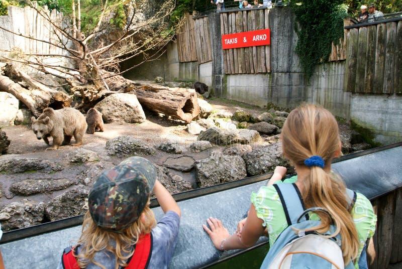 Ludzie patrzeje brown niedźwiedzi w zoo Goldau fotografia stock