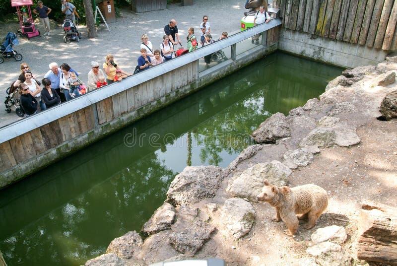 Ludzie patrzeje brown niedźwiedzi w zoo Goldau zdjęcie royalty free