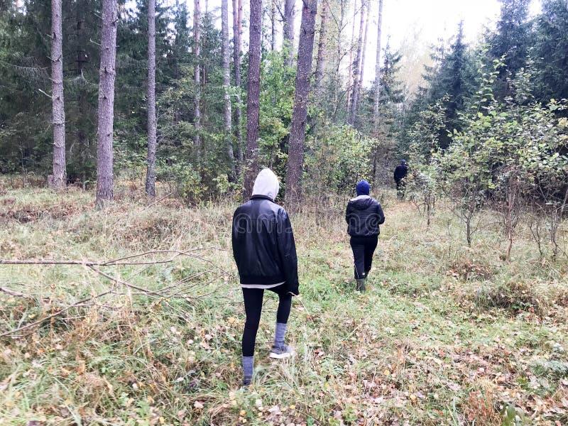 Ludzie, pieczarkowi zbieracze w ciepłych ubraniach chodzą w podwyżce przez jesień lasu z drzewami w naturze wzdłuż trawy fotografia stock