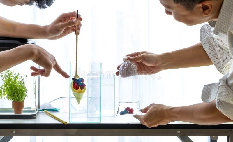 Ludzie sprzedaje ryba seans dlaczego dbać dla ryba nabywca zdjęcie stock