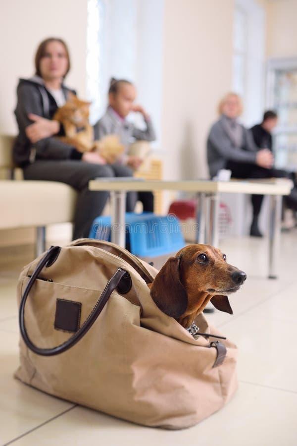 Ludzie z ich zwierzętami domowymi czekają badanie medyczne przy weterynaryjną kliniką Zdrowie zwierząt obraz royalty free