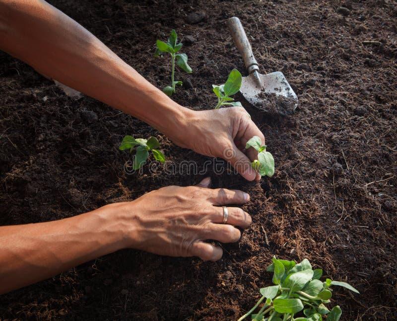 Ludzie zasadza młodego drzewa na brud ziemi z ogrodnictwa narzędzia use fotografia royalty free