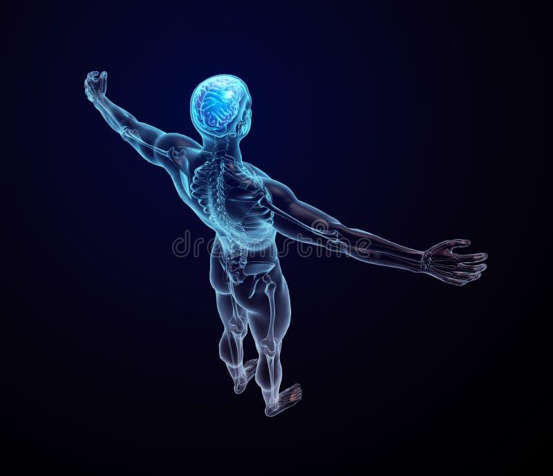 Ludzka anatomia - środkowy układ nerwowy royalty ilustracja