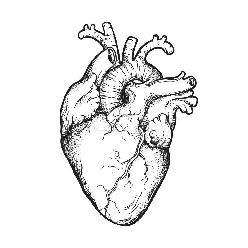 Ludzka anatomically poprawna ręka rysujący serca dotwork i kreskowa sztuka Błyskowy tatuaż lub druku projekta wektoru ilustracja ilustracji