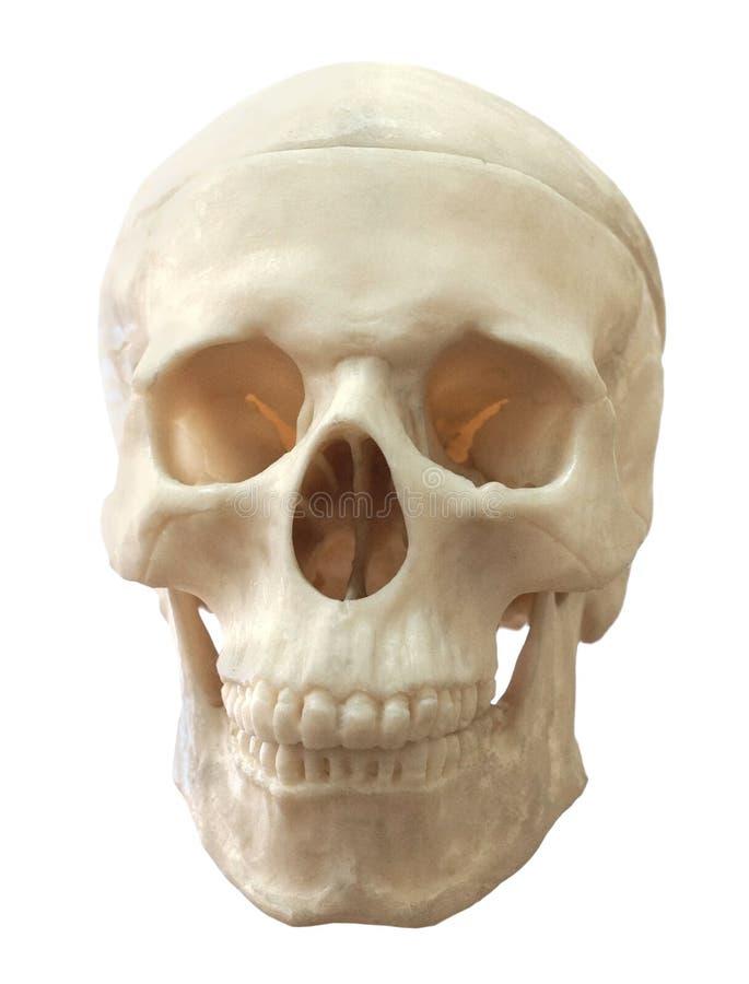Download Ludzka czaszka zdjęcie stock. Obraz złożonej z nieżywy - 28962870