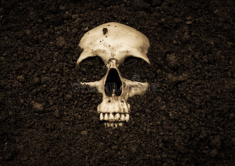 ludzka czaszka zdjęcie stock