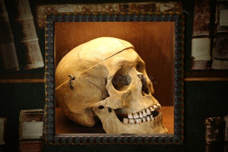 Ludzka czaszka i książki obraz royalty free