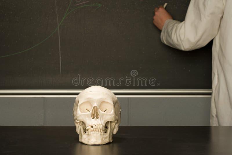 Ludzka czaszka na sala lekcyjnej biurku zdjęcie stock
