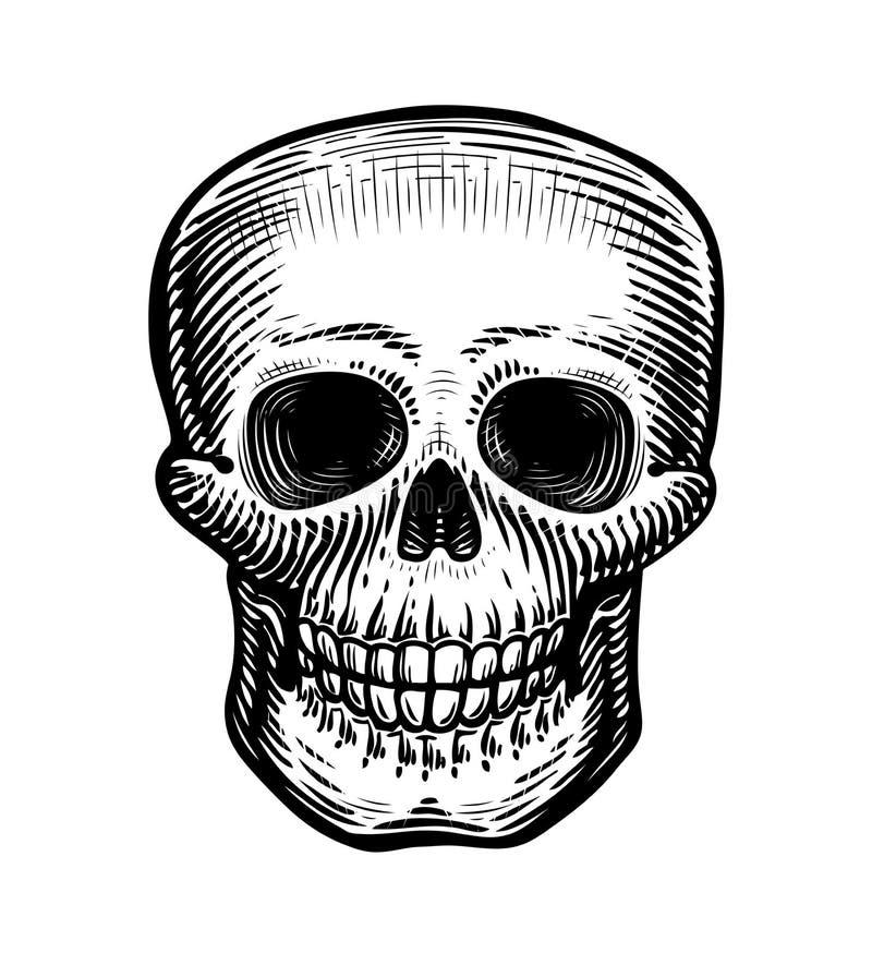 Ludzka czaszka, nakreślenie Pociągany ręcznie kościec, żywy trup lub nieżywy, Rocznika wektoru ilustracja ilustracja wektor