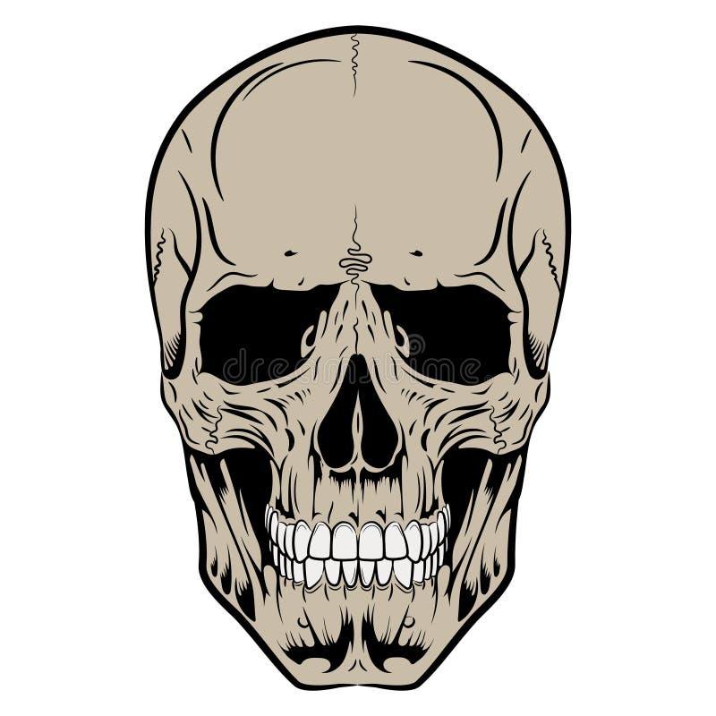 Ludzka czaszka, rysująca ręką ilustracji