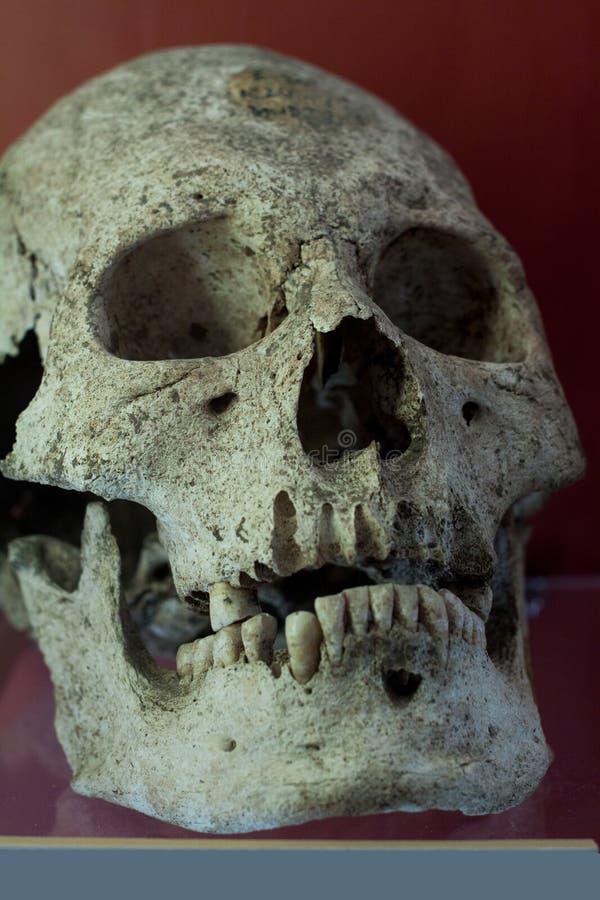 Ludzka czaszka z ciemnym tłem Pojęcie śmierć, horror i anatomia, Straszny Halloween symbol zdjęcie royalty free
